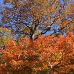 木々紅葉_8147
