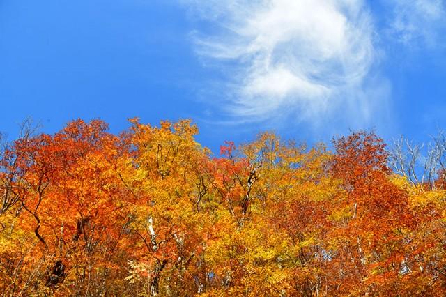 木々の彩りⅢ_9061