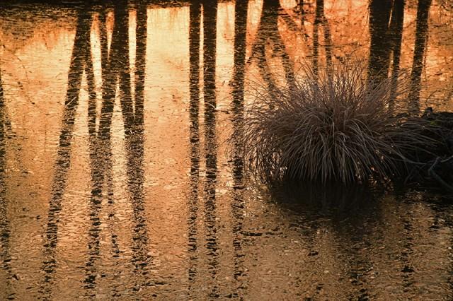 湖面の朝_1289