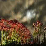満月の夜_1659